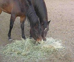 hur mycket betfor ska hästen ha