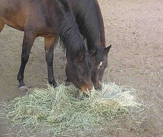 Animal feed - Equine nutritionists recommend that 50% or more of a horse's diet by weight should be forages, such as hay