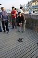 Huangpu catfish.JPG