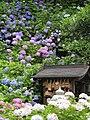 Hudaraku-san Kannonji 補陀洛山(ふだらくさん)丹州観音寺 P6260051.jpg