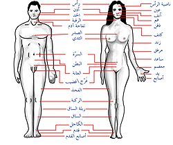 Human body features ar.jpg