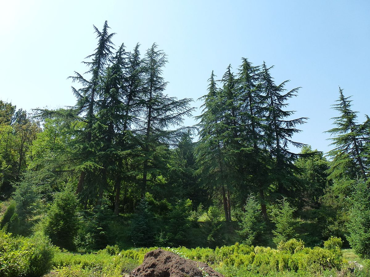 Ijevan Dendropark - Wikipedia