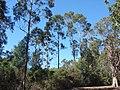 Ile Sainte Marguerite - panoramio - Alistair Cunningham (4).jpg