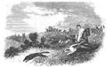 Illustrirte Zeitung (1843) 09 140 3 Die Fuchsjagd.PNG