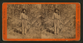 Indian Tom, Guide and mail carrier, by E. & H.T. Anthony (Firm) 2.png