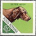 Irish-Setter-Canis-lupus-familiaris.jpg