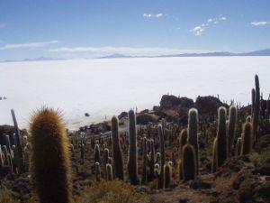 Daniel Campos Province - Isla del Pescado in Salar de Uyuni, Daniel Campos Province