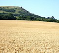 Ivinghoe Beacon from the North - geograph.org.uk - 204826.jpg