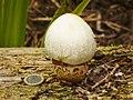 Jagdschloss Glienicke - Pilz (Glienicke Hunting Lodge - Fungus) - geo.hlipp.de - 40964.jpg
