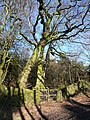 Jaggers Lane - Stile opposite Rushley Lodge Farm - geograph.org.uk - 340474.jpg