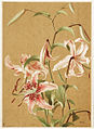 Japan Lily (Boston Public Library).jpg