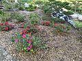 Japanese Friendship Garden (Balboa Park, San Diego) 15 2016-05-14.jpg