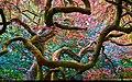 Japanese tree (8679388225).jpg