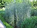 Jardin botanique Dijon 037.jpg