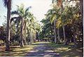 Jardin de Pamplemousses (3001820961).jpg