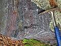 Jaspilite banded iron formation (Soudan Iron-Formation, Neoarchean, ~2.69 Ga; Rt. 169 roadcut between Soudan & Robinson, Minnesota, USA) 15 (18419322093).jpg