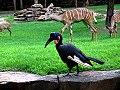 June 23- Fort Worth Zoo (675671745).jpg