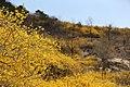 KOCIS Korea Seoul Spring Flowers 03 (8662711370).jpg