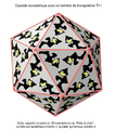Kapsid-Triangulation-02-fr.png