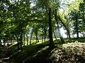 Kapušiansky hrad 19 Slovakia24.jpg