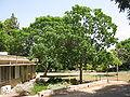 Kibutz Yagur IMG 2995.JPG