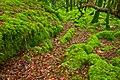 Killarney Forest - HDR (10376953143).jpg