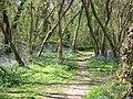 Kingsdown Wood - geograph.org.uk - 1097350.jpg