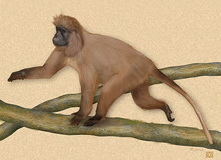 Kipunji Species of Old World monkey