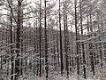 Kiyomicho Kamiodori, Takayama, Gifu Prefecture 506-0206, Japan - panoramio (1).jpg