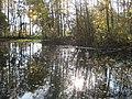 Kleiner Teich im NSG Schöbendorfer Busch - panoramio.jpg