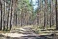 Kleistu mežs, Rīga, Latvia - panoramio (1).jpg