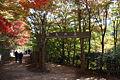 Kobe municipal forest botanical garden17s3872.jpg