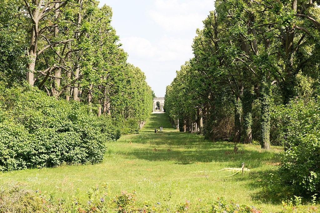 Krimlindenallee im Park Sanssouci (Sichtachse Orangerie - Belvedere auf dem Klausberg)