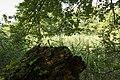 Kurcaparti tanösvény Mindszent - panoramio (15).jpg
