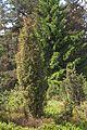 Kveten pr hadi vrch 31.jpg