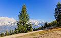 L'A de Bran, (1798 m) Val d'Anniviers. Europese larix (Larix decidua) 03.JPG