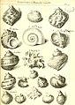 L'histoire naturelle éclaircie dans deux de ses parties principales, la lithologie et la conchyliologie - dont l'une traite des pierres et l'autre des coquillages - ouvrage dans lequel on trouve une (14801657903).jpg