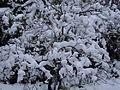 La neve... ElmAgos garden in Udine Italy..jpg
