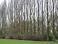 Ladybarn Park - geograph.org.uk - 486897.jpg