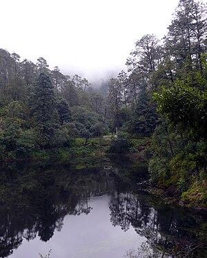 Lagunas de Zempoala National Park - Plant life near one of the lakes