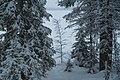 Lakeside trees by Särkijärvi in winter coat, Muonio, Lapland, Finland, 2019 January.jpg