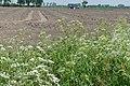 Landbouwgrond Hagebeemd P1140792.jpg