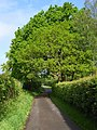 Lane at Frith Common Farm - geograph.org.uk - 173557.jpg