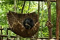 Laos - Kuang Si waterfall 02 - Rescue Bear Sanctuary.jpg