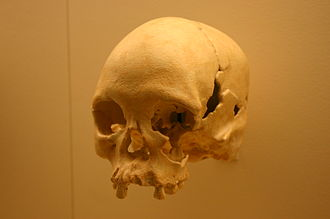 Luzia Woman - A cast of Luzia's skull at the National Museum of Natural History in Washington, DC
