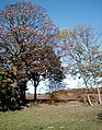 Last leaves of autumn - geograph.org.uk - 333558.jpg