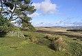 Lauder Common - geograph.org.uk - 353886.jpg