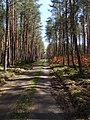Leśna droga - panoramio - Wojciech Kuśmirek.jpg