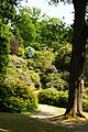 Leonardslee Gardens, Sussex (1) (geograph 1906394).jpg