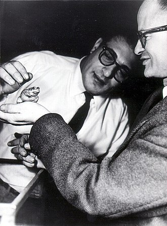 "Walter Pitts - Walter Pitts (right) with Jerome Lettvin, co-author of the seminal cognitive science paper ""What the Frog's Eye Tells the Frog's Brain"" (1959)"
